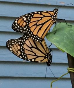 2 monarchs