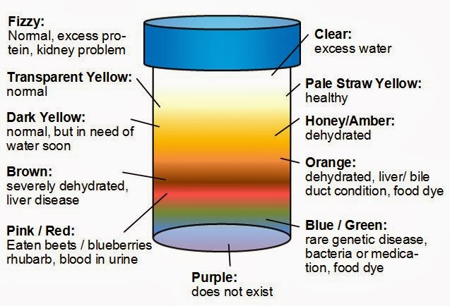 3_urine-color-meaning-chart