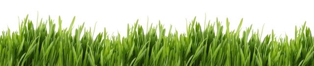 tall grass banner